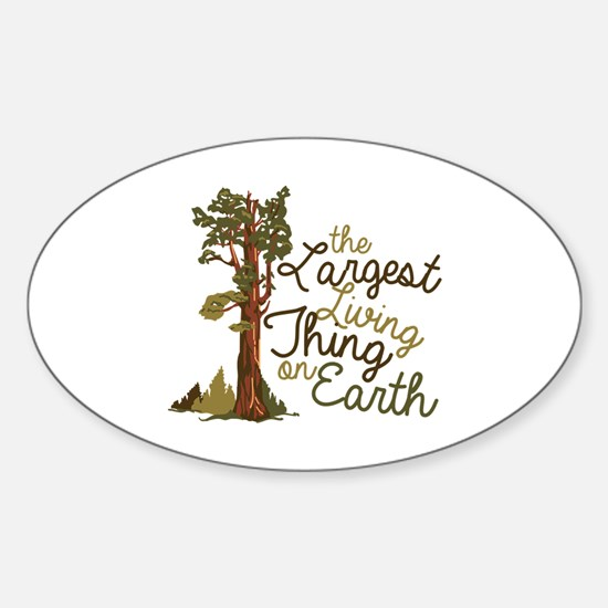 Largest Living Thing Decal