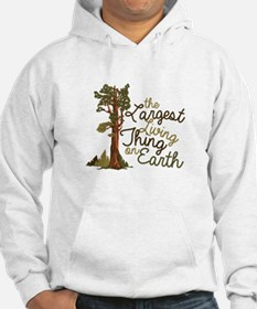 Largest Living Thing Hoodie