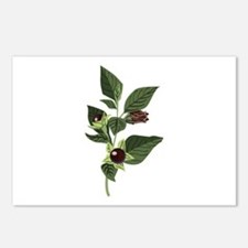 Atropa Belladonna Postcards (Package of 8)