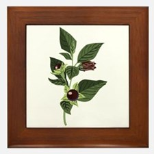 Atropa Belladonna Framed Tile