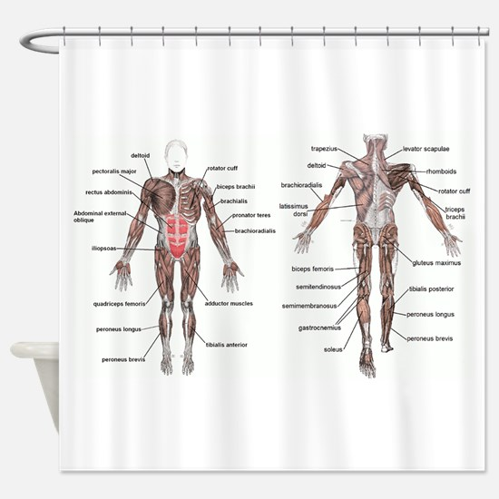 Funny Anatomy Shower Curtain