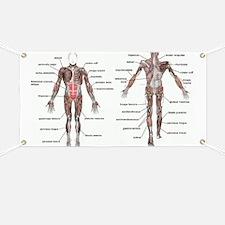 Unique Anatomy Banner