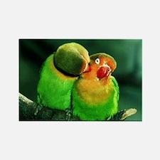 Cute Birds Rectangle Magnet