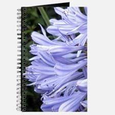 Lily Of The Nile Journal