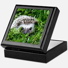 Scrapper the Hedgehog Keepsake Box