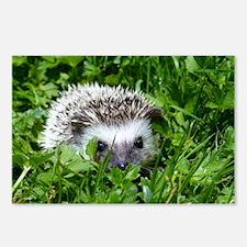 Scrapper the Hedgehog Postcards (Package of 8)