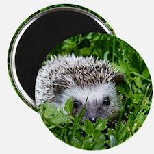 Scrapper the Hedgehog Magnet