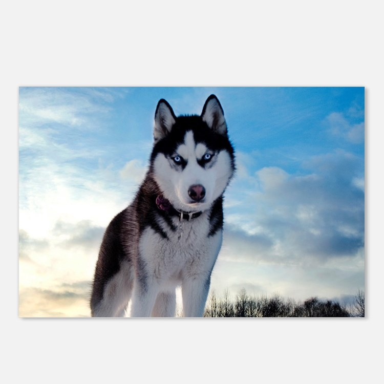 Husky Dog Outdoors Postcards (Package of 8)