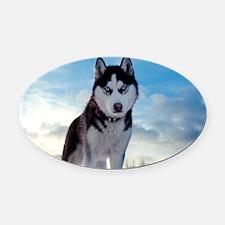 Husky Dog Outdoors Oval Car Magnet