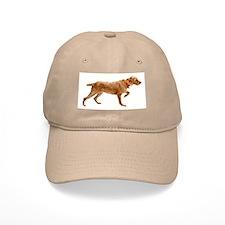 Wirehaired Vizsla Baseball Cap