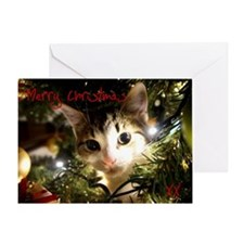Kitten In The Christmas Tree Card Greeting Cards