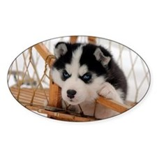 Husky puppy 2 Decal