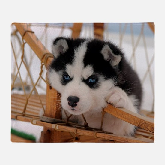Husky puppy 2 Throw Blanket