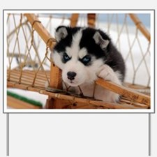 Husky puppy 2 Yard Sign