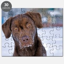 Cute Chocolate labrador Puzzle