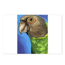 Senegal Parrot Postcards (Package of 8)