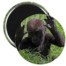 Gorilla20151002 Magnets
