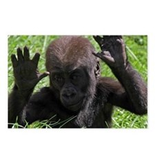 Gorilla20151002 Postcards (Package of 8)