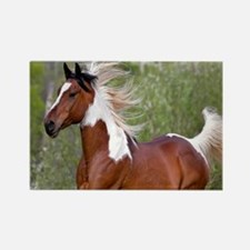 Pinto Horse 2 Magnets