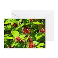 Carolina Spicebush Greeting Cards (Pk of 10)