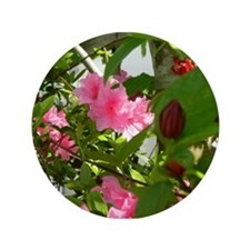 Pink Azalea And Spice Bush Button