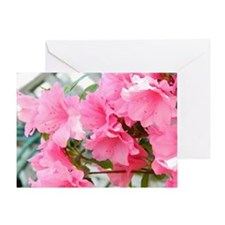 Pink Azaleas In Bloom Greeting Card