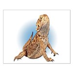 Bearded Dragon Small Poster