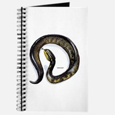Cottonmouth Snake Journal