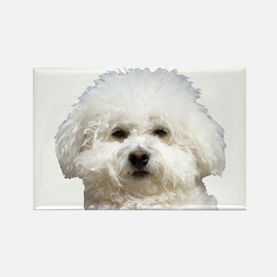Fifi the Bichon Frise Rectangle Magnet (10 pack)