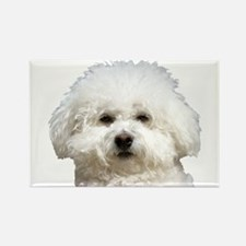 Fifi the Bichon Frise Rectangle Magnet (100 pack)