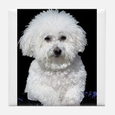 Fifi our Bichon Frise Tile Coaster