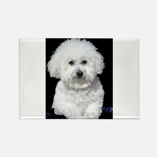 Fifi our Bichon Frise Rectangle Magnet (10 pack)