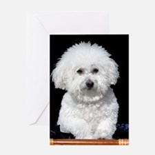 Fifi our Bichon Frise Greeting Card