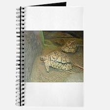 Turtles Journal