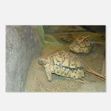 Turtles Postcards (Package of 8)