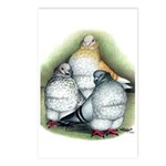 Chinese Owl Pigeons Postcards (Package of 8)