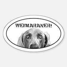 Weimaraner In A Box! Oval Bumper Stickers