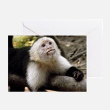 Baby Capuchin Monkey Greeting Cards (pk Of 20)