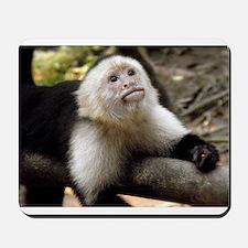 Baby Capuchin Monkey Mousepad