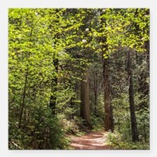 "Forest Trail Square Car Magnet 3"" x 3"""