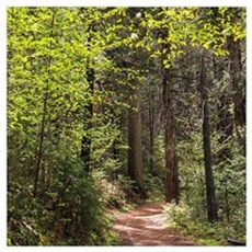 Forest Trail Canvas Art