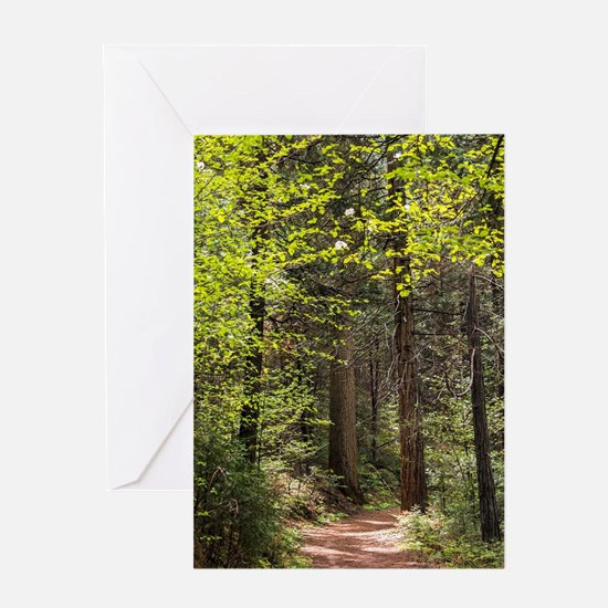 Forest Trail Greeting Cards