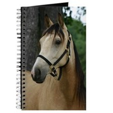Andalusian filly profile Journal