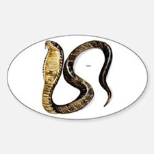 Cobra Snake Oval Decal