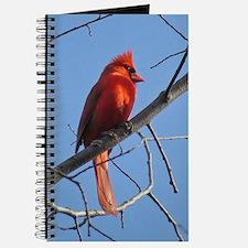 Male Cardinal Journal
