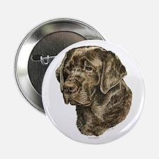 Chocolate Labrador Retriever Button