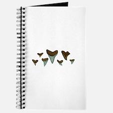 Shark Teeth Journal