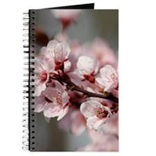 PLUM BLOSSOMS Journal