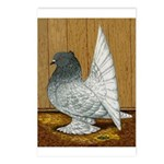 Indian Fantail Pigeon Postcards (Package of 8)