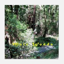 A Walk In Muir Woods Tile Coaster